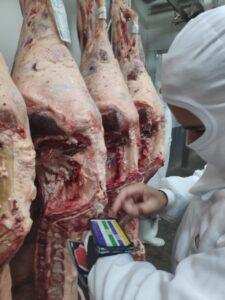 classificação Brazil Beef Quality